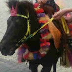 Пони, ослик, лошадка на праздник